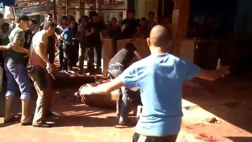 Barbaren zeigen öffentlich ihren Kindern, wie man Tiere behandelt – Australien liefert die Rinder dazu