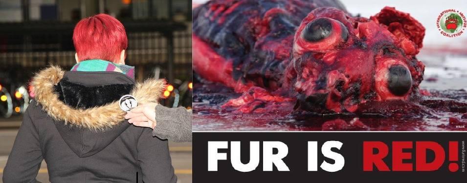 Pelz ist rot – besonders auch Pelzkrägen!