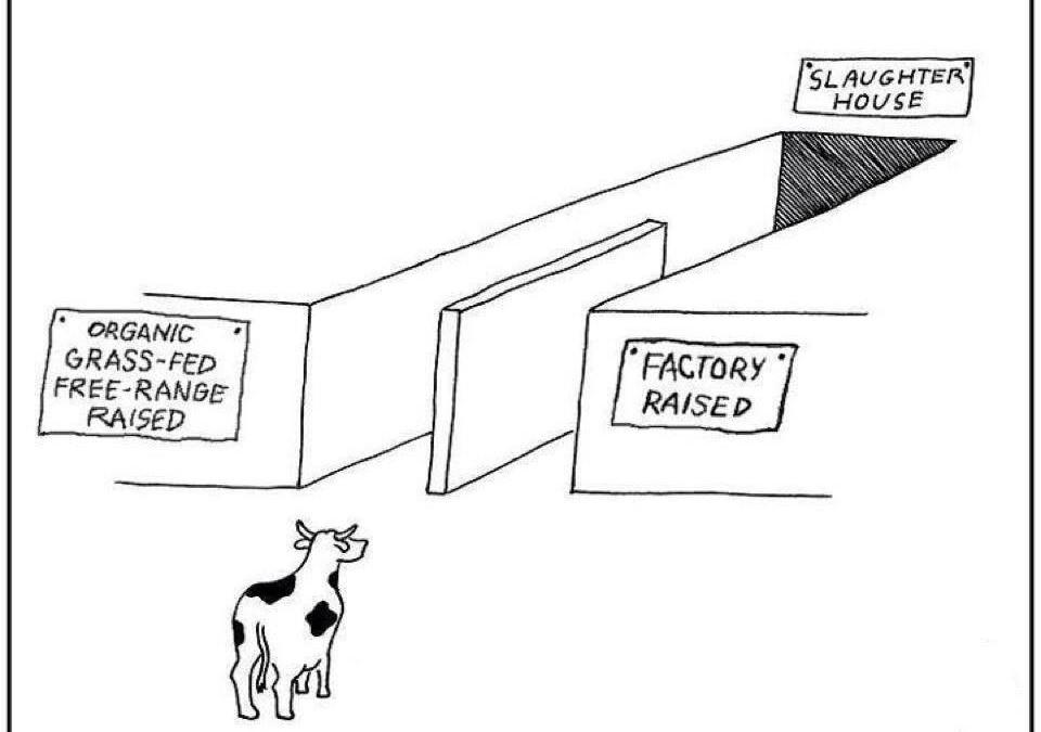 Milch aus Biohaltung und industrieller Haltung