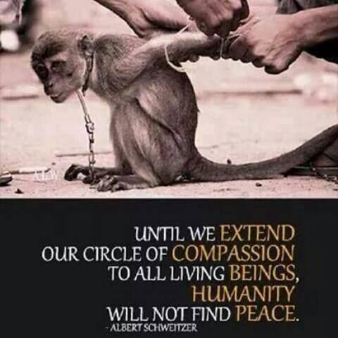 """""""Bis wir den Kreis unseres Mitgefühls auf alle Lebewesen ausdehnen, wird die Menschheit keinen Frieden finden."""" – Albert Schweitzer, Theologe, Philosoph und Arzt. (1875 – 1965)"""