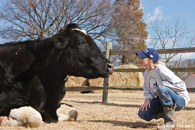 Die Geschichte von Norman – er wurde 12 Jahre alt, 12 Jahre älter als seine männlichen Leidensgenossen in der Milchindustrie