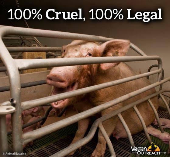100 % grausam, 100% legal100 % vegan ist die einzige vernünftige und moralische Antwort darauf!