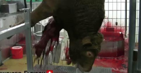 VgT-TV-Spot macht die Fleischindustrie nervös – bitte auch für den Spot abstimmen!