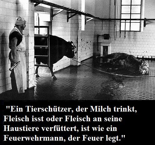 Wer Tiere isst oder ausbeuten lässt, also Fleisch, Fisch, Milchprodukte und Eier konsumiert oder an Tiere verfüttert, ist kein Tierschützer, sondern ein Tierschinder! Es gibt nur Tierausbeutung oder eine vegane Lebensweise. Dazwischen gibt es nichts.