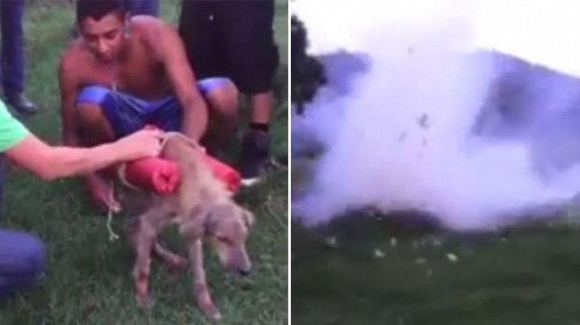 Der Hundemord mit Feuerwerkskörper und der Hundemord durch den Motorradbeifahrer verursachten grosse Aufregung