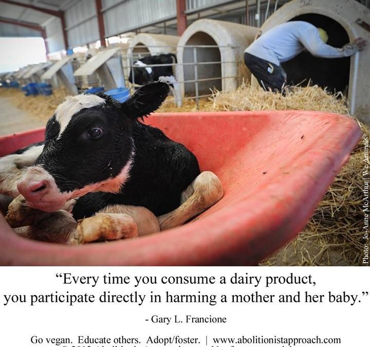 """""""Jedes Mal wenn Sie ein Milchprodukt konsumieren, dann schaden Sie einer Mutter und ihrem Baby."""""""