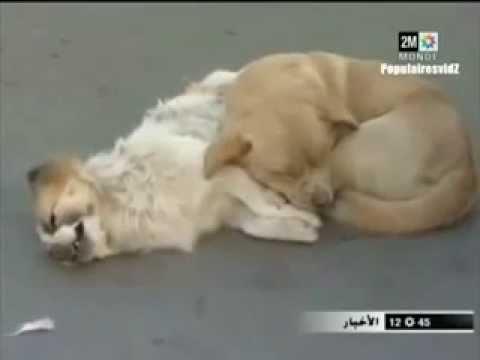 """""""Ein Hund bleibt mir im Sturme treu, der Mensch nicht mal im Winde.""""Franz von Assisi"""