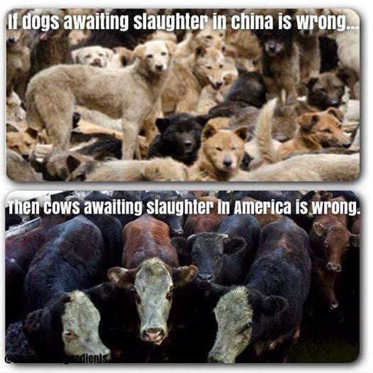 Wenn das Schlachten von Hunden in Asien falsch ist,  dann ist auch das Schlachten von Kühen in der restlichen Welt falsch!