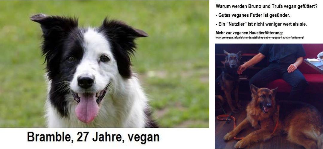 Vegane Haustierfütterung