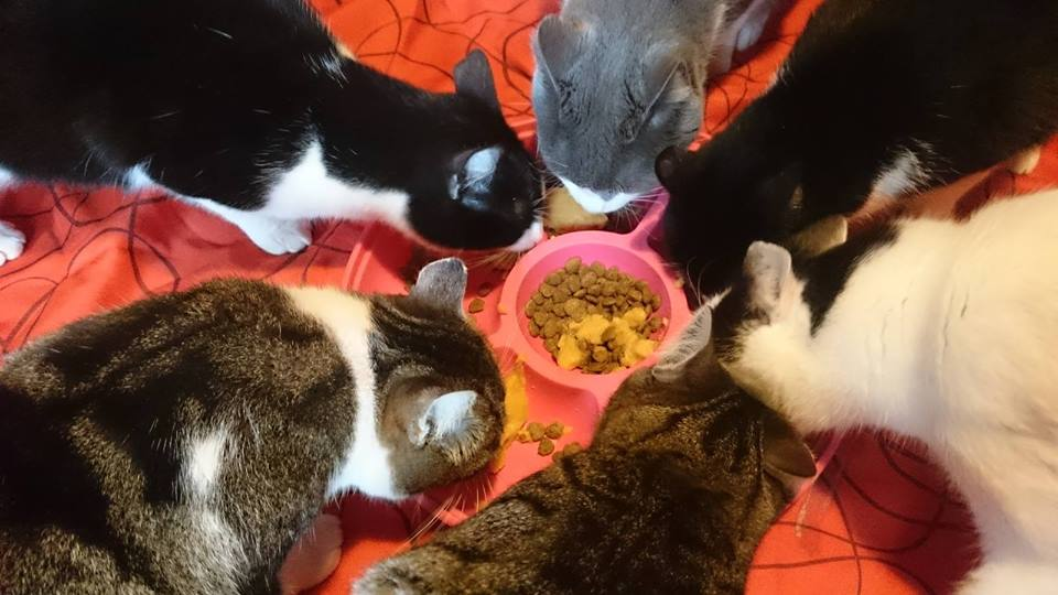 Alle Katzen auf dem Tierrettungshof El Hogar ProVegan werden seit Jahren vegan gefüttert!