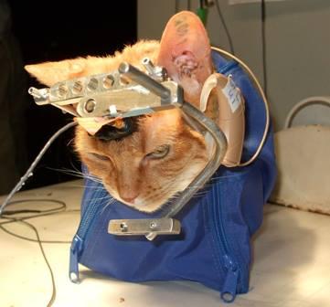 Bist Du gegen Tierversuche?  Dann hast Du jetzt eine grosse Chance, etwas dagegen zu tun!