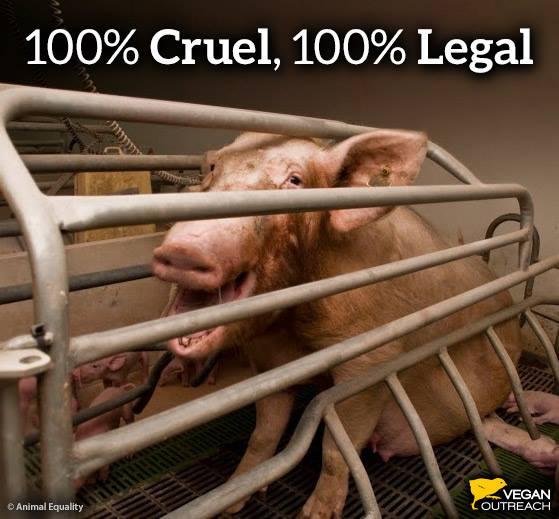 """100 % grausam, 100 % legal, entspricht 100 % dem Tier""""schutz""""gesetz"""