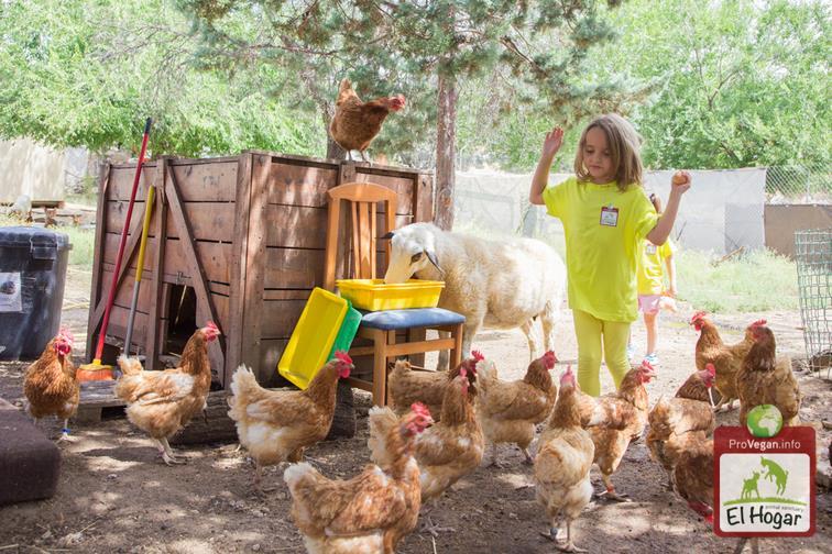 Warum müssen Hühner auf einem Tierrettungshof kastriert werden?