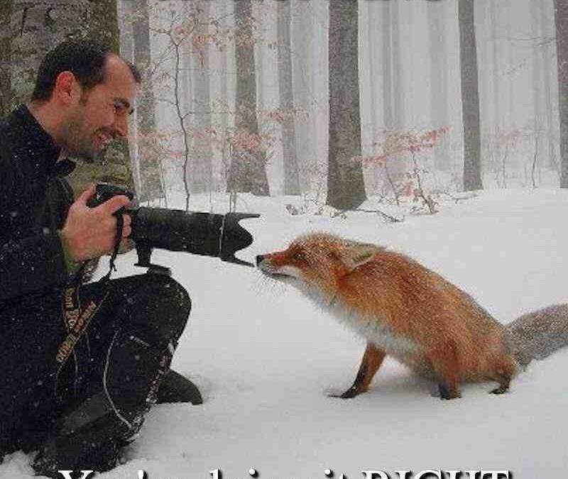 Die einzig richtige Fuchsjagd