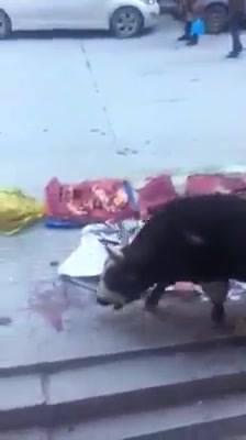 Sehenswertes Video: Eine Kuh auf einem Lebend-Fleischmarkt riecht die Haut und das Fleisch ihrer toten Familienmitglieder und weint