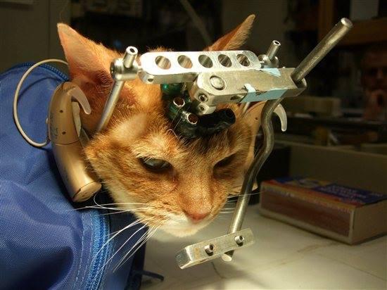 Lesenswert – Der ehemalige Tierexperimentator Dr. Dr. Anderegg: