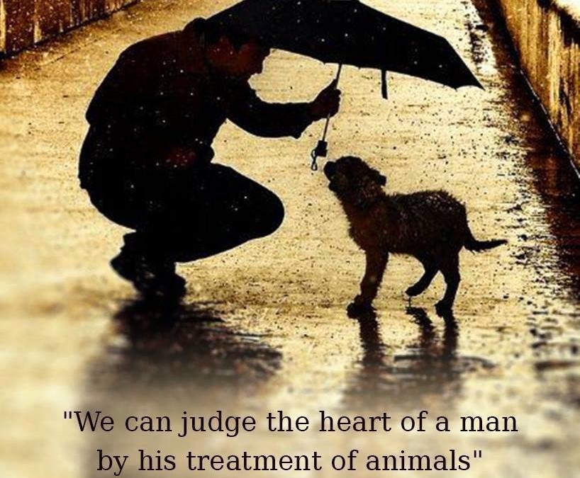 »Wir können das Herz eines Menschen danach beurteilen, wie er Tiere behandelt.«