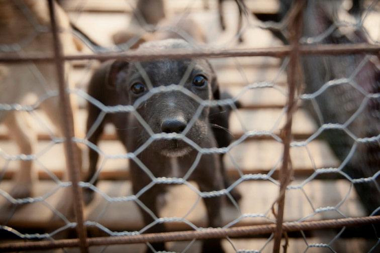 Tierärzte wehren sich gegen das Hunde-Elend