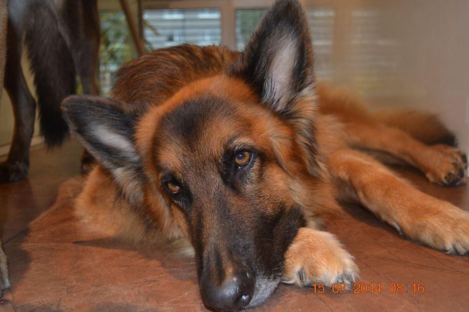 Das ist Bruno, vegan. Ehemaliger Tierschutzfall aus Spanien