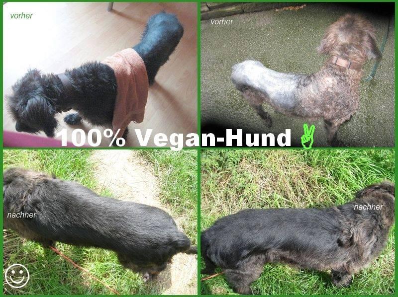Ernährungsbericht Hund Samy von Carolina Kieckbusch auf ProVegan