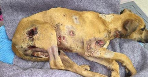 Fassungslos: 6 Monate alter Hund erlebte das Schlimmste, was einem Hund passieren kann