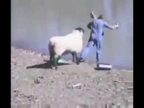 Mal etwas sehr Erfreuliches! – Tier bekämpft Tierquäler