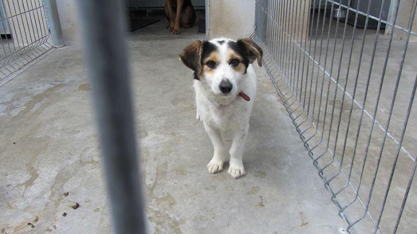 Offener Brief des Leiters einer Tötungsstation für Haustiere