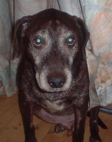 Die Geschichte von Alfi – Ein todkranker Hund bekommt durch vegane Fütterung noch zwei gute Lebensjahre geschenkt, aber lesen Sie selbst die Nachricht an ProVegan