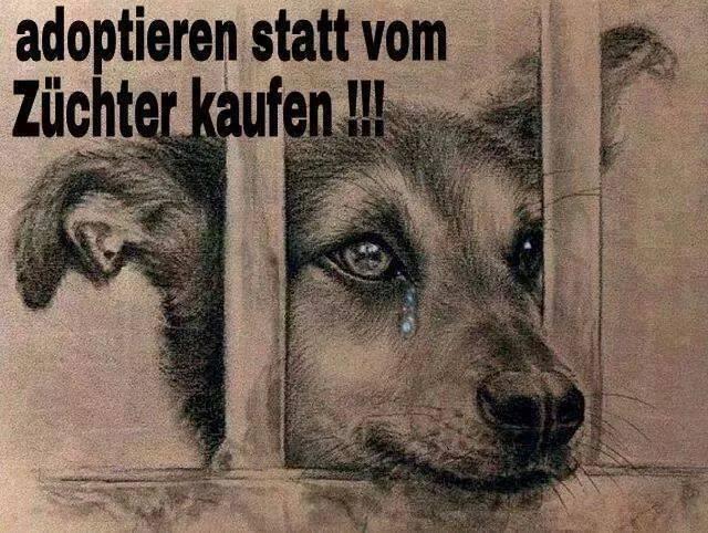 Keine Hunde bei legalen oder illegalen Züchtern kaufen!