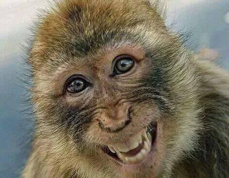 """Warum sollte ein Tier weniger wert sein als ein Mensch? Nur weil die selbsternannte """"Krone der Schöpfung"""" es sich so zurecht gelegt hat?"""