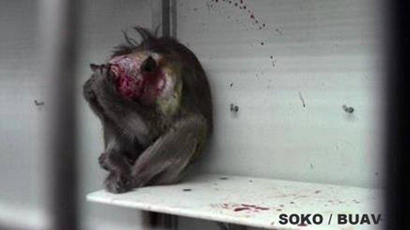 Wichtige Petition zur totalen Sinnlosigkeit der Affenhirnforschung