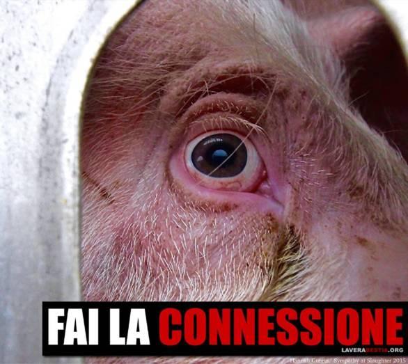 """Die willkürliche und absurde Vorstellung, dass Tiere weniger wert sind als Menschen und """"Nutztiere"""" weniger wert sind als Haustiere, ist die Wurzel allen Übels auf dieser Welt!"""