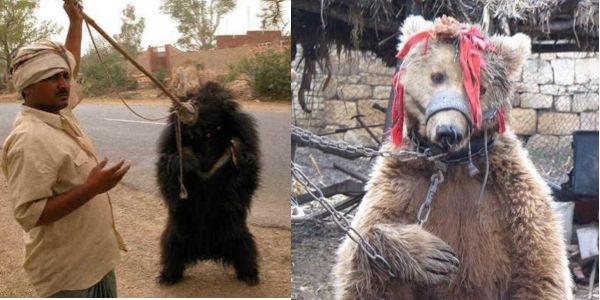Petition gegen Bärenquälerei