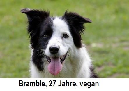 Die beste Ernährung auch für Haustiere: vegan – im besten Einklang mit dem Tierschutzgesetz!