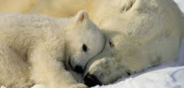 Silvesterböller richten immer Schaden bei Tieren, Menschen und der Umwelt an