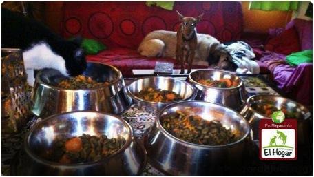 Auf dem Tierrettungshof El Hogar ProVegan leben auch die Tiere vegan!