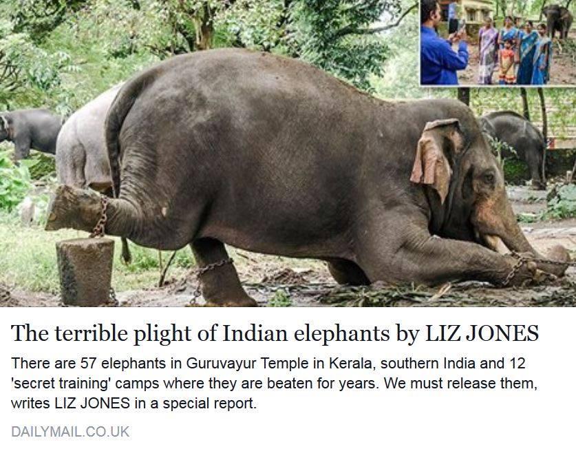In Asien werden Elefanten für touristische Zwecke übel misshandelt, gequält und gebrochen