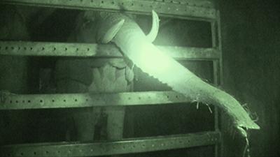 Tierquälerei: Elefant ständig bei klirrender Kälte in einem engen LKW eingesperrt