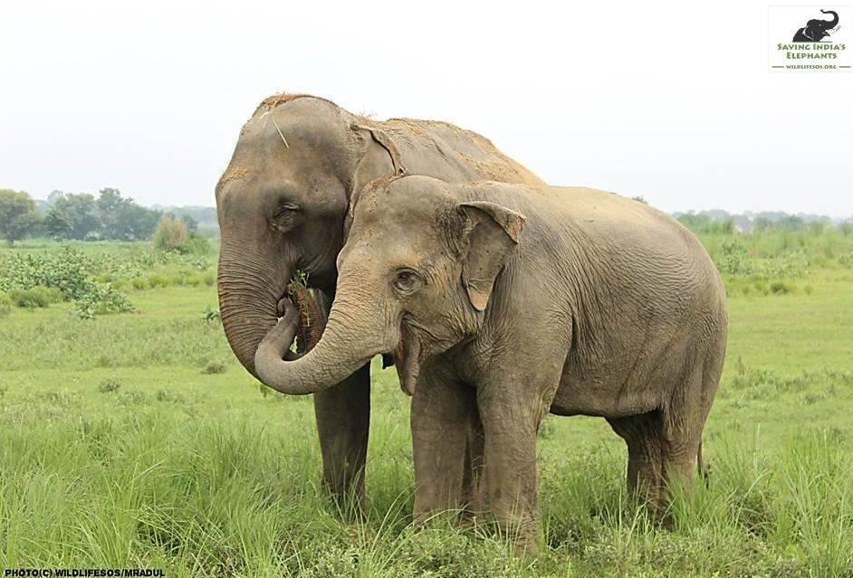 Elefant hilft blindem Elefant