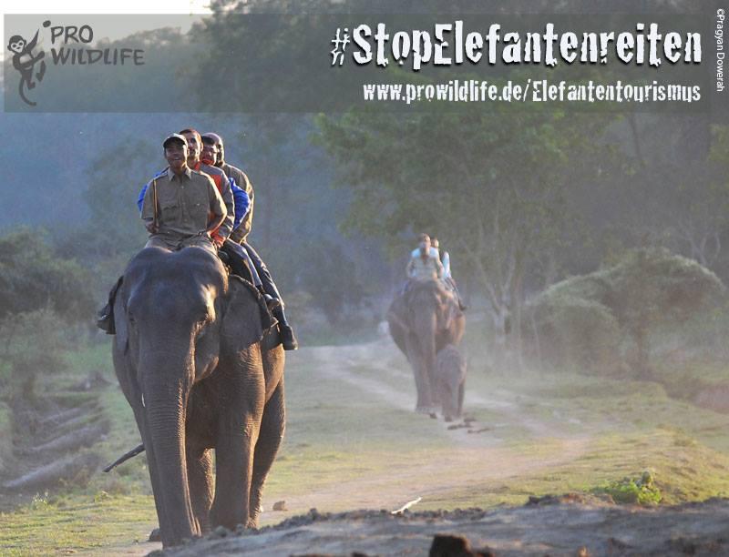 Elefantenreiten als Traum für Fernreisende?