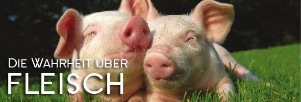 Die groteske Logik derjenigen, die ihre Haustiere mit Fleisch füttern
