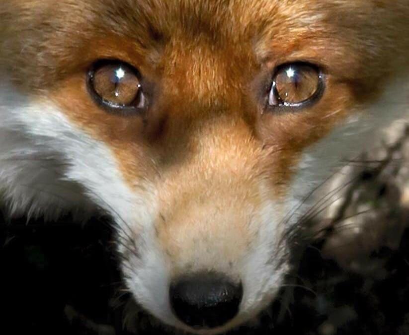 Füchse (und alle anderen Tiere) zu jagen und zu ermorden, ist ein Verbrechen – daran kann ein einigermassen vernünftig denkender Mensch keinen Zweifel haben