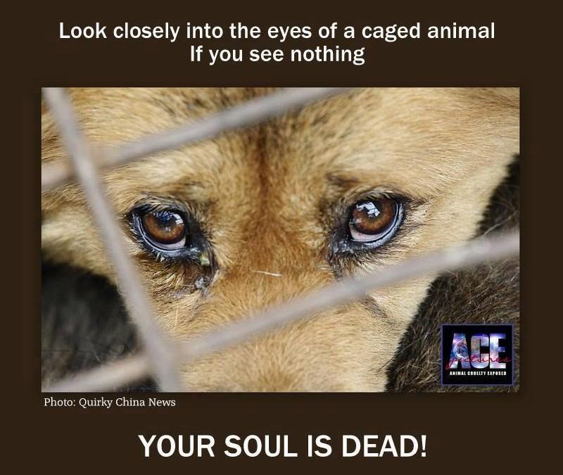 Schauen Sie in die Augen diesen gefangenen Tieres – wenn Sie nichts sehen, dann ist Ihre Seele tot!