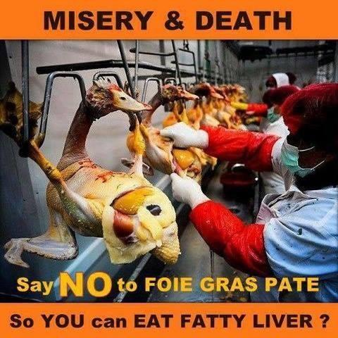 FOIE GRAS (Gänsestopfleber) bedeutet Elend essen – so wie bei allen Tierprodukten!