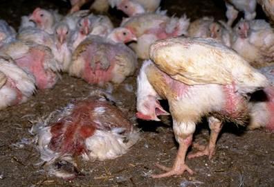 """Selbst die tierfeindliche WELT schreibt: """"Doch dass es den Tieren gut geht, glauben nur die Produzenten."""""""