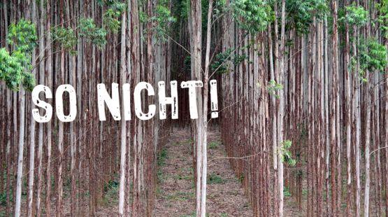 Tausende Bauern in Brasilien: Wir wollen keine Gentech-Bäume!