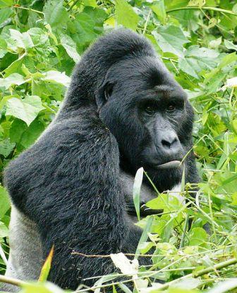 Finger weg vom Virunga-Nationalpark