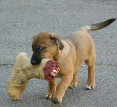 Ein veganer Hund macht mal eine kleine Ausnahme – aber garantiert bio, er weiss wo es herkommt, vom Nachbarn seines Vertrauens, und der Nachbar hatte ein gutes Leben :-)