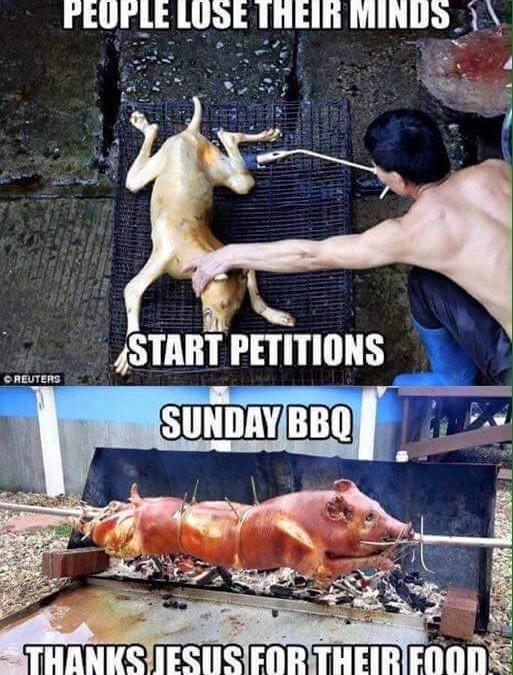 Wenn es um Hunde geht, starten die Leute Petitionen – Schweine essen sie