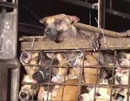 Was für eine Schande – Hunde in Korea
